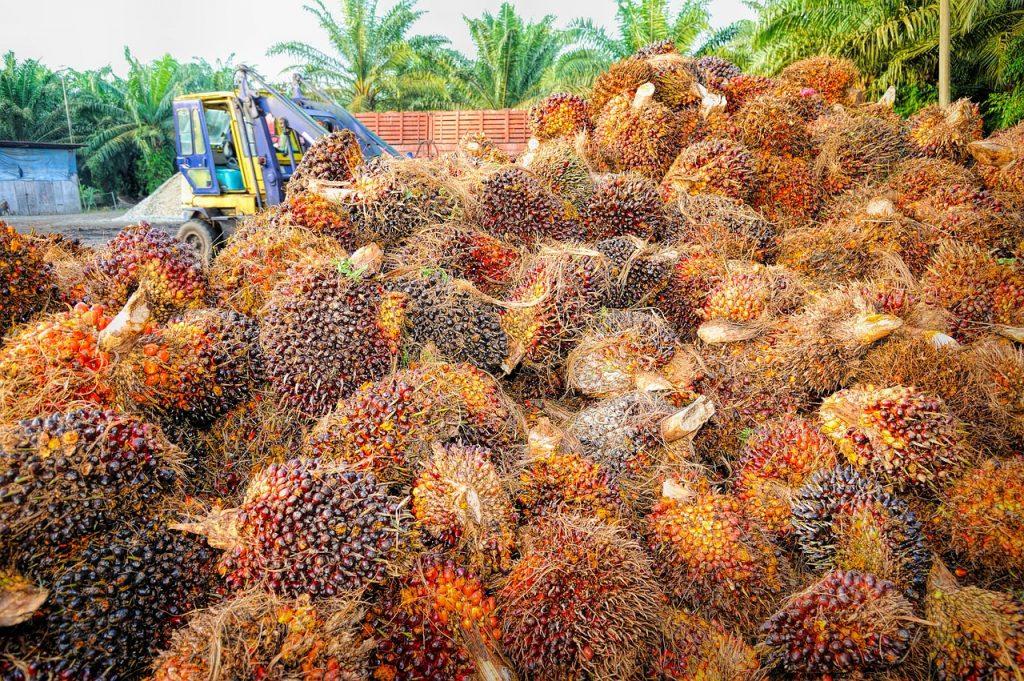 Verbod op palmolie is niet de oplossing